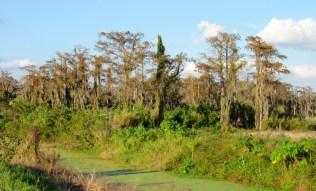 Les Everglades au Loxahatchee National Wildlife Refuge à Boynton Beach en Floride