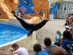 Spectacle de phoques au Miami Seaquarium