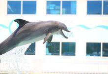 Photo of Clearwater Marine Aquarium : venez visiter Winter le dauphin !