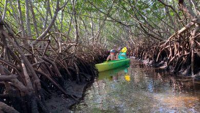 Photo of Weedon Island et ses magnifiques tunnels de mangrove à St Petersburg en Floride