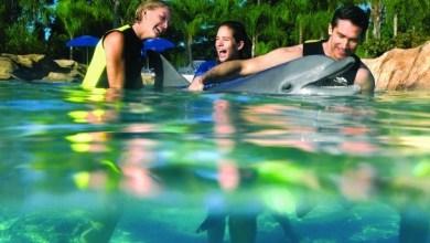 Photo of Voir et nager avec les dauphins en Floride