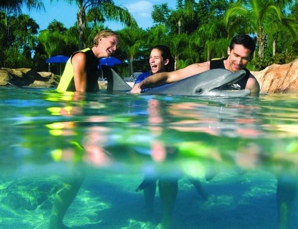 Nager avec les Dauphins en Floride