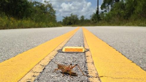 everglades-route-sauterelle