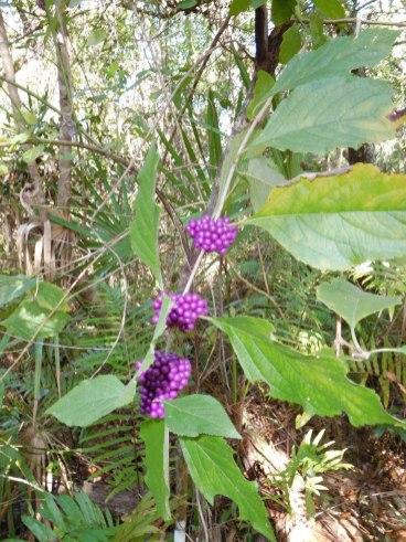 Plantes dans le refuge des panthères