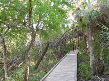Mangrove près de la plage de Delnor-Wiggins Pass State Park à Naples Floride