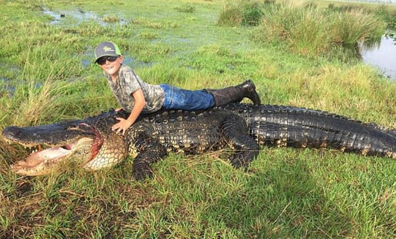 Alligator géant à Okeechobee