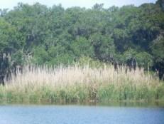 Myakka River State Park / Sarasota / Floride