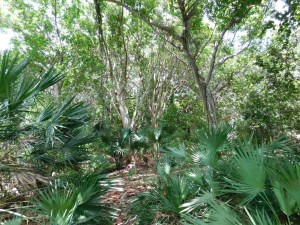 Chemins forestiers de Crandon Park / Key Biscayne / Miami / Floride