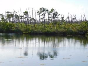 île de Big Pine Key / Floride