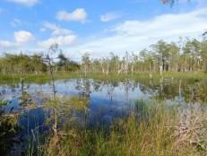Apoxee Trail, sentier de randonnée à West Palm Beach en Floride