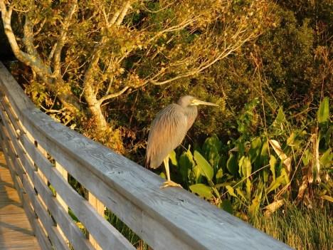 Coucher de soleil sur Green Cay Park / Everglades / Boynton Beach / Floride