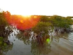 Coucher de soleil sur Big Pine Key (Keys de Floride)