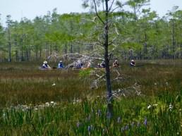 Kayak au parc Grassy Waters Preserve de West Palm Beach