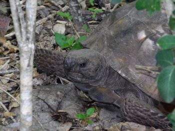 Plage de Delnor Wiggins Pass State Park à Naples en Floride