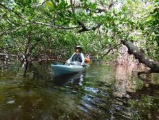 Kayak dans la Rookery Bay (Naples, Florida) avec Rising Tide Explorer