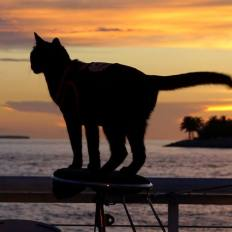 Dominique Lefort, le Cat Man français de Key West