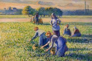 La Cueillette des Pois, de Camille Pissarro