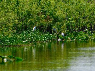 Oiseaux sur le Lake Okeechobee à Moore Haven en Floride
