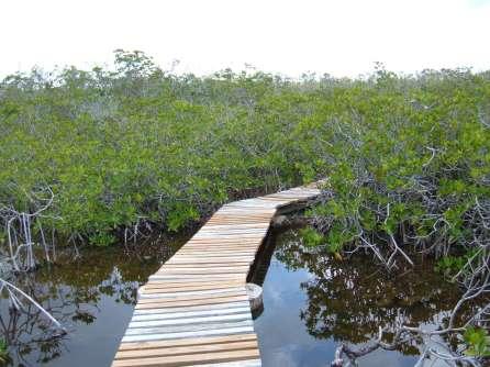 Bahamas Grand Bahama Lucayan National Park