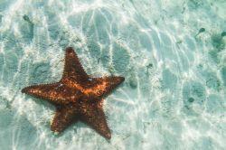 Bahamas Eleuthera - Etoile de mer