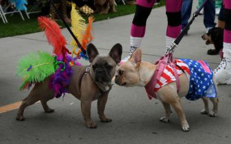 Howl-O-Ween : Halloween à Pinecrest /Miami