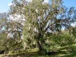 Babcock Ranch Preserve, à Punta Gorda en Floride