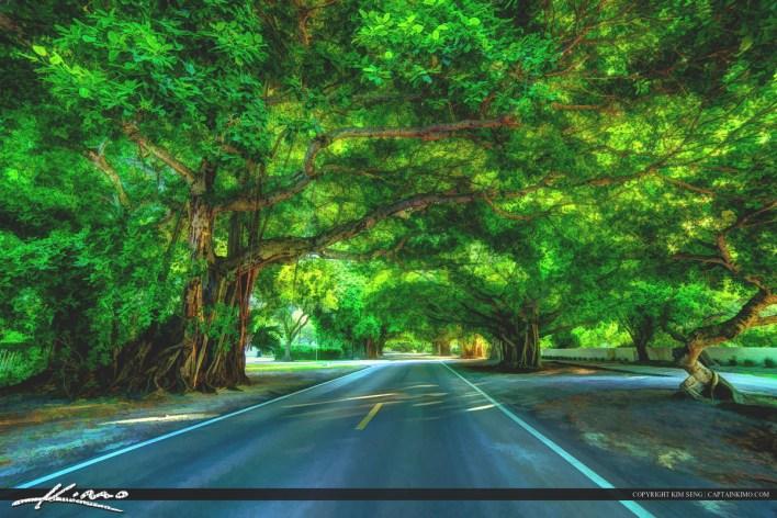 Old Cutler Road à Coral Gables