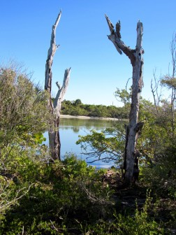 Stump Pass State Park, à Englewood en Floride