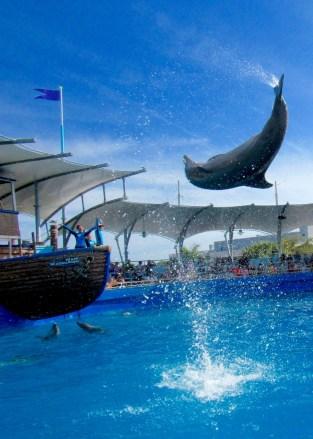 Dauphins au Miami Seaquarium
