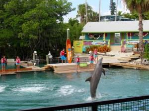 """Le spectacles de dauphins """"Flipper"""" au Miami Seaquarium"""