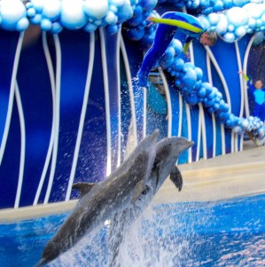 Les dauphins à SeaWorld Orlando