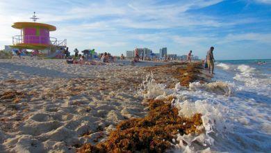 Photo de Infos sur la présence potentielle d'algues invasives à Miami et en Floride