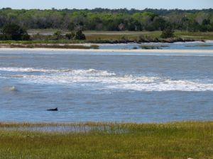 Un dauphin près de Fort Sumter