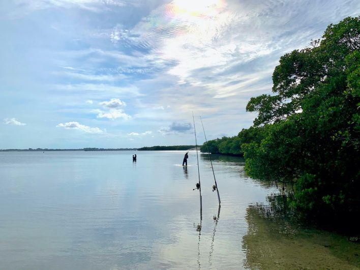 Pêcheurs dans la mangrove, côté baie, à Fort Pierce en Floride