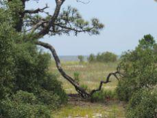Bald Point State Park dans la St Marks National Wildlife Refuge