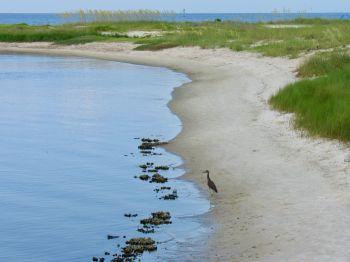 bald-point-state-park-st-mark-national-park-plage-panhandle-Floride-5080