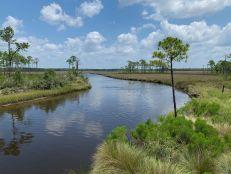 bald-point-state-park-st-mark-national-park-plage-panhandle-Floride-8406