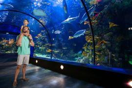 L'aquarium dans la pyramide Moody Gardens à Galveston Texas.
