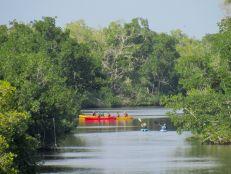 Kayaks sur le canal à Flamingo