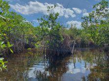 Noble Hammock Canoe Trail