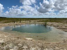 Un cenote dans le parc national des Everglades.