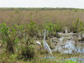 Parc national des Everglades.