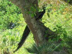 L'ex-zoo de Miami, au sud de Crandon Park sur Key Biscayne