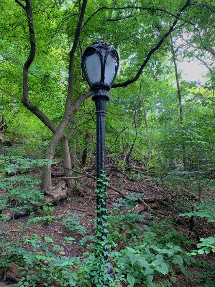 The Ramble à Central Park