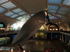 Salle de la faune marine au Musée d'histoire naturelle de New-York (American Museum of Natural History)