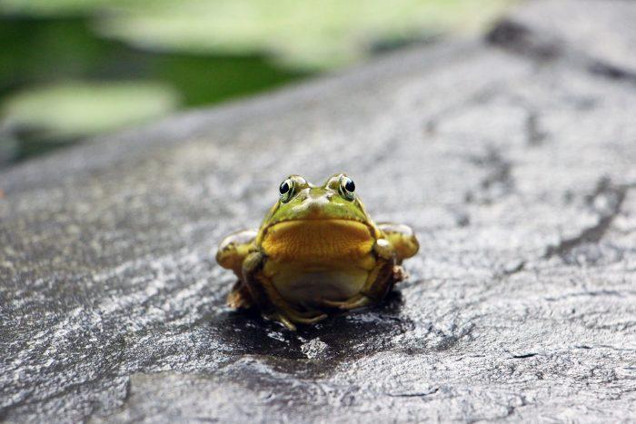 expression japonaise japon grenouille puits