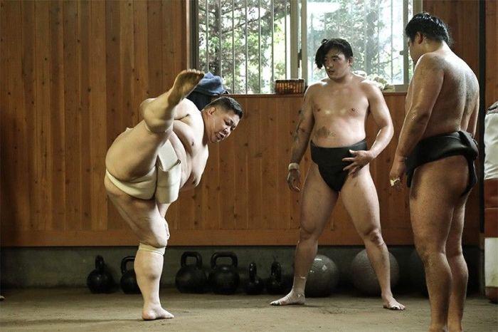 écurie de sumô