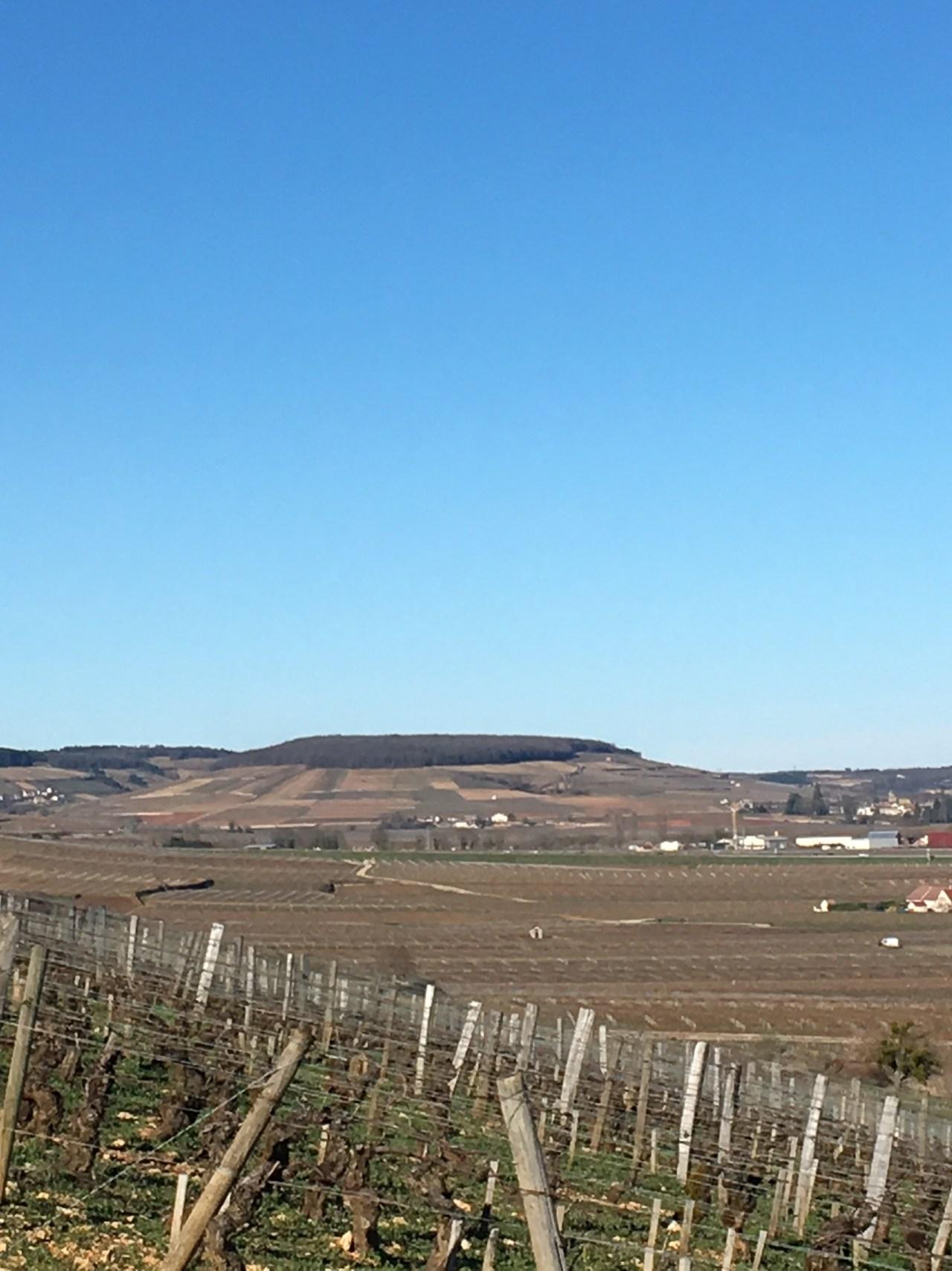 Montagne de Corton fin hiver