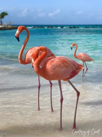 Flamingo Beach _Courtesy of Court45