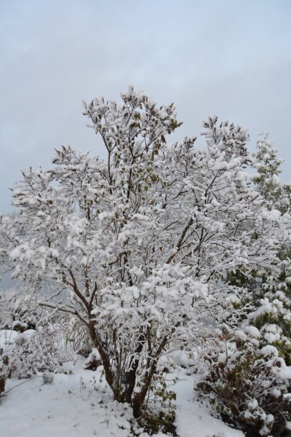 De la neige dans les Appalaches_9